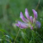 letnie pirenejskie kwiatki