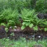 leśny strumyczek