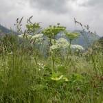 łąka w Areu