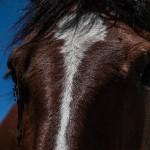 przyjacielski koń