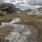 mokradła, Sognefjellet Norwegia