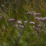niżej pojawiła się bujniejsza roślinność i kwiaty