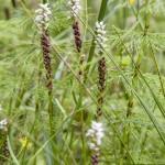 bujna roślinność
