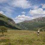 łąki wokół Herdalen