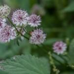 letnie kwiatki