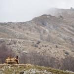 konie z rifugio matanna