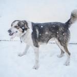 husky-wyprawy.com