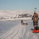 Laponia- psi zaprzęg