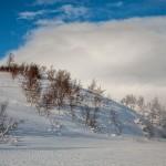 typowa dla Finnmarksvidda wichura