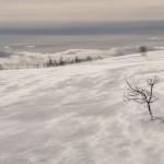 wędrujący śnieg