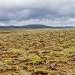 kwitnąca tundra na polu lawowym