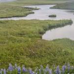Thingvellir Islandia, fot Kasia Nizinkiewicz