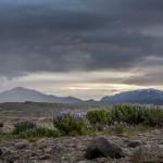 Łubin arktyczny, Islandia fot Kasia Nizinkiewicz