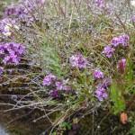 mokre rośliny