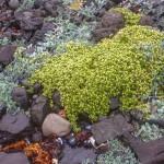 nadmorskie rośliny porastające plażę