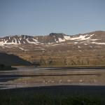 Hornvik