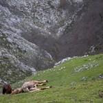 koń z Senda Arcediano