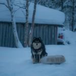 kemping w Sevettijarvi