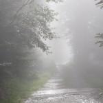 Pireneje lipiec las niedaleko przełęczy Portillon