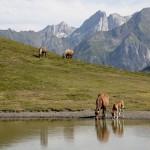 konie na halach