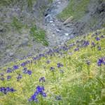 Pireneje, Lipiec -irysy
