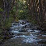 Chile leśna rzeczka
