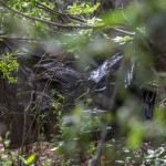 Condor Cirquit, Rio Blanquillo