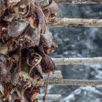 Lofoty-suszce się ryby