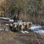 Armenia, Gavar