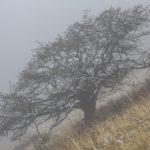 Arevik, Armenia