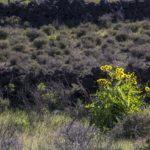 El Hierro, El Pinar