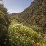 Alto de Garajonay, la Gomera
