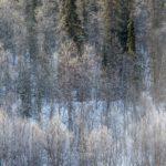 Ivalojoki, Kuttura