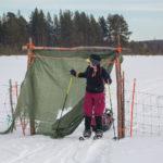 w górę Ivalojoki