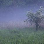 głóg we mgle, za płotem