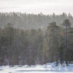 Inari-Saariselka