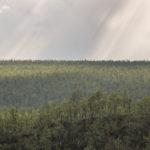 Pöyrisjärven erämaa cz3- Korteoja
