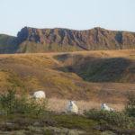 Emstrur- Þórsmörk(