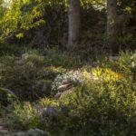 dziki skalny ogródek