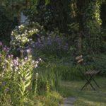 wieczorniki i rododendron